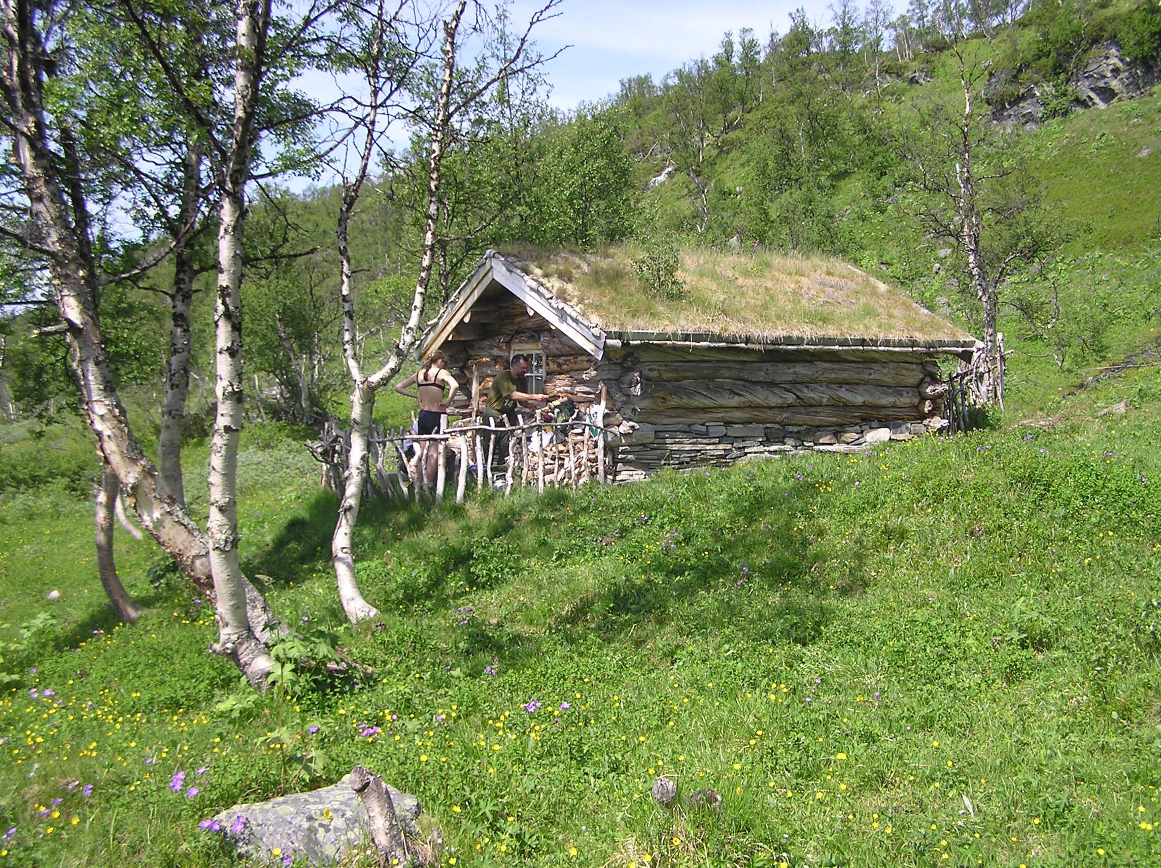 Turtips: Kvannflatløa
